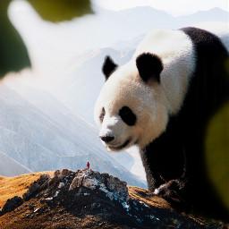 panda animals nature surreal cute