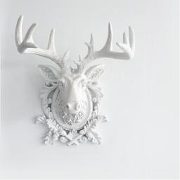 minimalism christmasspirit whiteplaster deerhead whitewall freetoedit