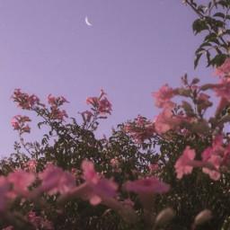 purple sky moon stars flowers