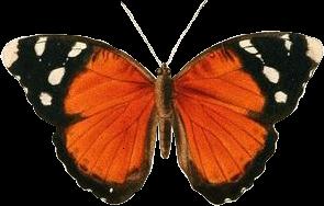 butterfly orange aesthetic vsco vintage freetoedit