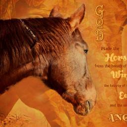 horses horsequotes horsephotography ilovemyhorse