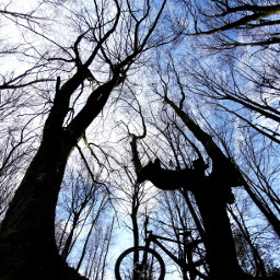 mtb mountainbike bike trees prespective