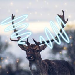freetoedit reindeers