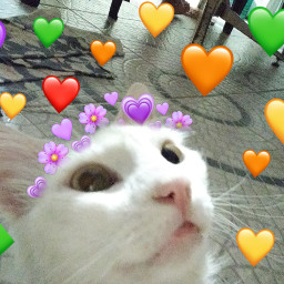freetoedit flowercat emojibackground emojicrown