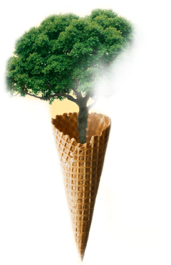freetoedit evergreen