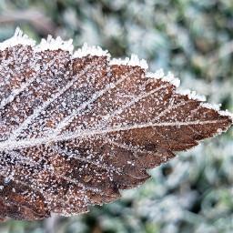 freetoedit frostymorning winter jackfrost samsungphotography