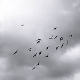 birdsinflight freetoedit silhouette cloudy moody