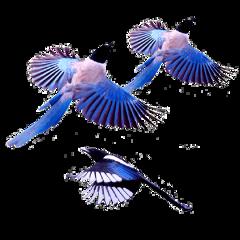 ftestickers bird birds fly frend freetoedit