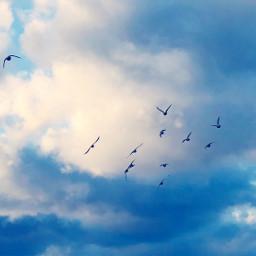 birdsinflight flockofbirds clouds sky freetoedit