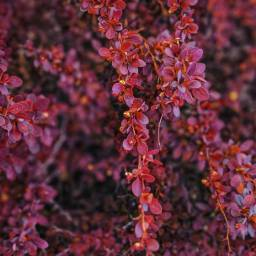 nature woodswalking appreciatenaturearoundyou bushes shrubs freetoedit