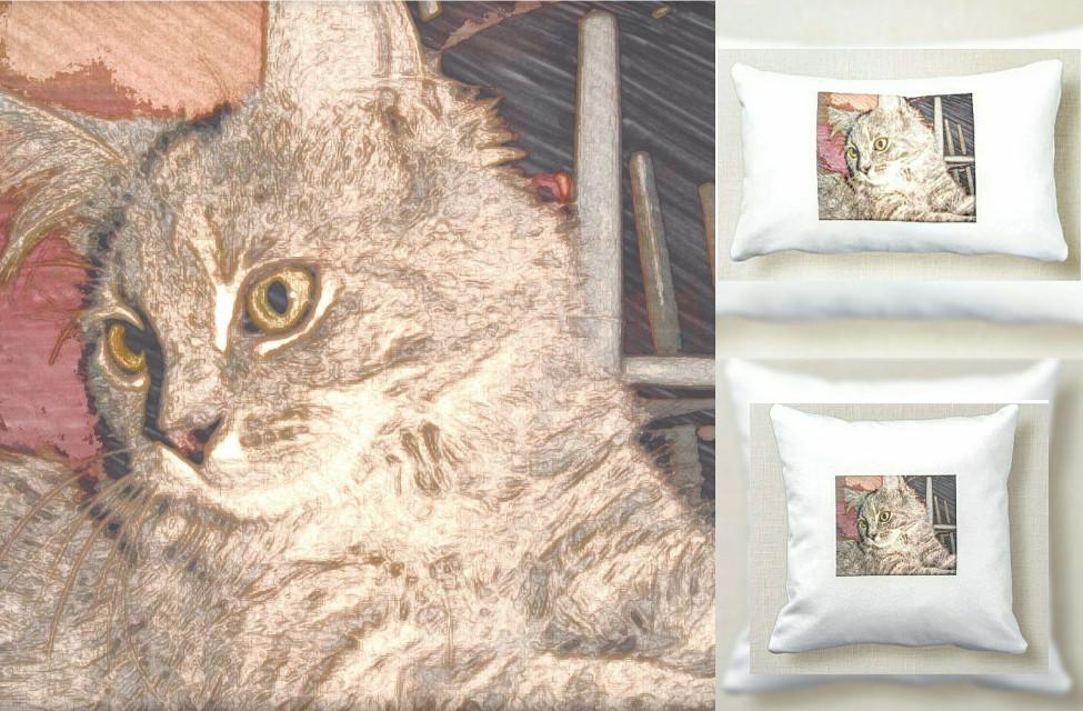 #freetoedit #throwpillows #kitty #cat #catphoto #craft #crafts #mydesign