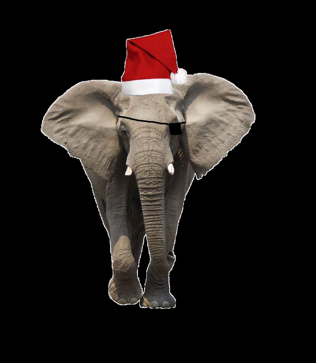 #ftestickers #stickers #elephant #christmashat #christmas #freetoedit#animal #funny
