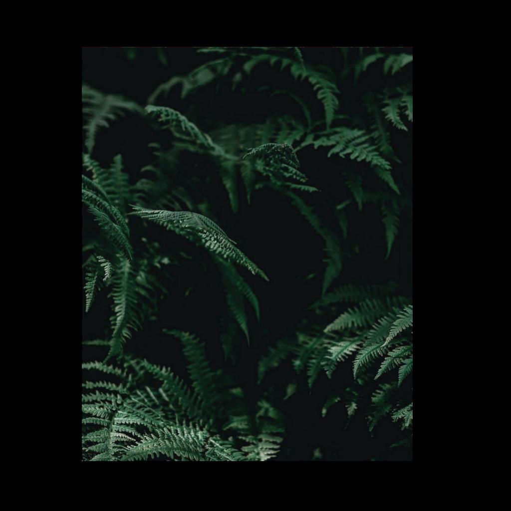 #PicsArt #background #ccc #Hintergrund #Carola-in-Köln #remixit #remixit❤ @Carola-in-Koeln #darkGreen #Dunkelgrün #farn #deepinTheWoods #green #Dark