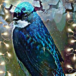 freetoedit bird petsandanimals pet branch ecfestivepets