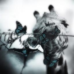 freetoedit surrealism butterflys girraffe funedit