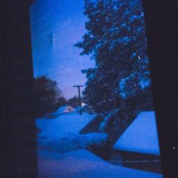 snow snowday trees dawn morning