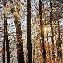 freetoedit naturephotography woodland icycletrees goldenhours