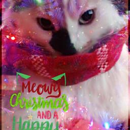 freetoeditbutgivemecredit miso misothecat calico cat freetoedit ecfestivepets festivepets