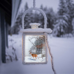 freetoedit snow winter ircchristmasdeer christmasdeer