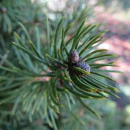 freetoedit conifer tree branch macro