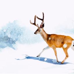 freetoedit winter deer bunny winterwonderland ircchristmasdeer christmasdeer