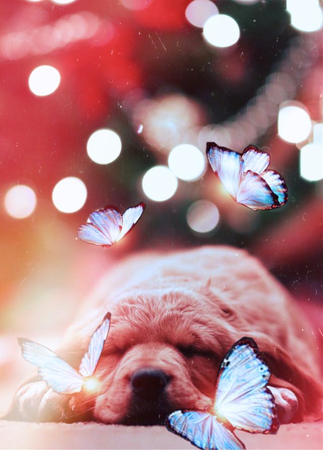 #freetoedit #dog #cute #butterflys #remixit