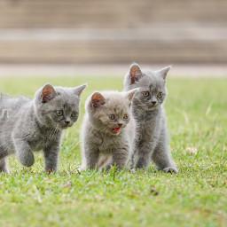 kitten kitty cat