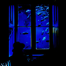 freetoedit aquarium window ircwindow