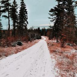 winter snow frozen coldday winterwonderland