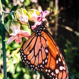 beautifulnaturecolors naturephotography