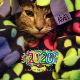 happynewyear 2020 catsofpicsart oldfriends alvin freetoedit