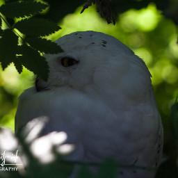 freetoedit bird owl wildlife petsandanimals
