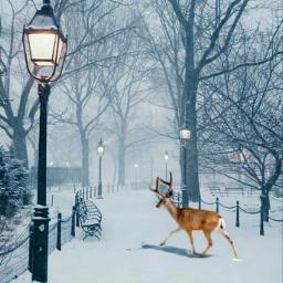 freetoedit christmasdeer deer park path