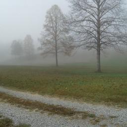 freetoedit fog path naturephotography fall scenery