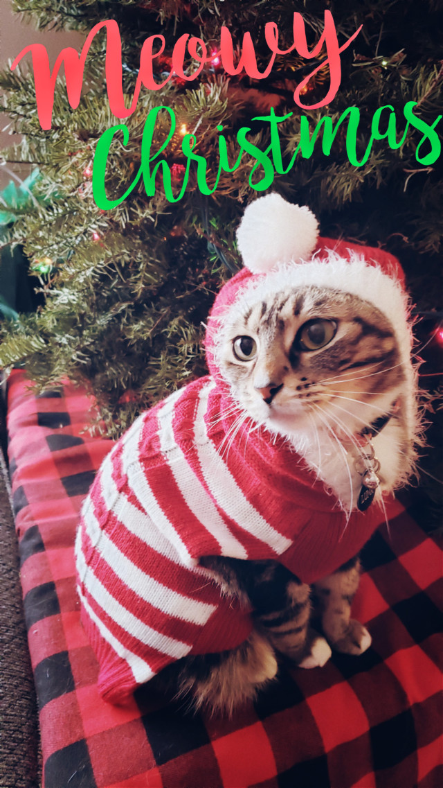 #freetoedit #meowychristmas #furbaby #kittylove #myoriginalphoto  #ecfestivepets #festivepets