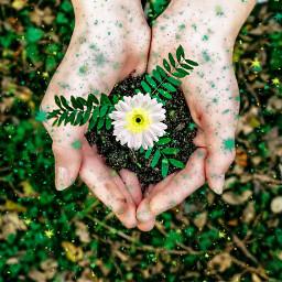 freetoedit magic green flower hand