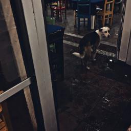 straydog coldday rainyday streetphotography mobilephotography