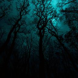 freetoedit darkforest forest tree trees