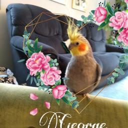 freetoedit bird cute george