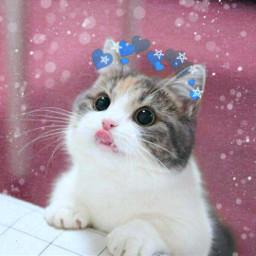 freetoedit ecfestivepets festivepets #myedit #pets