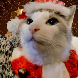 freetoedit festive festivepets festivepet newyears ecfestivepets