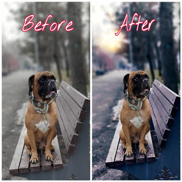 Recently, I like this kind of photo editing, what do you think about it? #madewithpicsart #myedit #mydog #boxerlover #lovepicsart😙💙