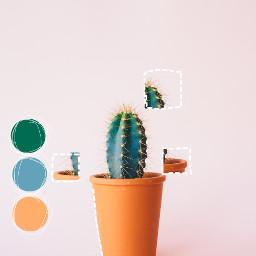 freetoedit cactus colorpaint