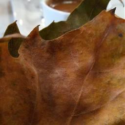 freetoedit leaf turkishcoffee myphotography noedit