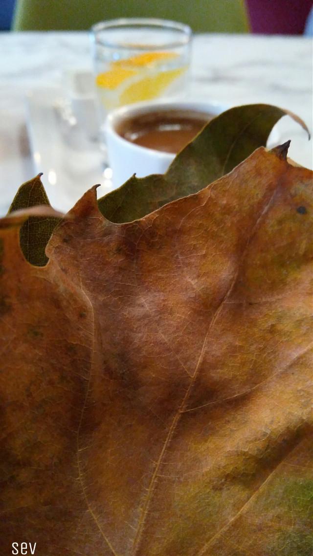 #freetoedit #leaf #turkishcoffee #myphotography #noedit #nofilter