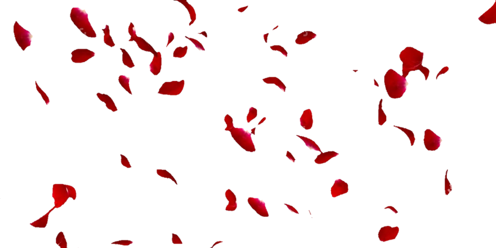 #lucymy #rosa #rosalucymy #petali #petalo