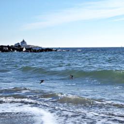 freetoedit atlanticocean ligthhouse birdsinflight wintertime