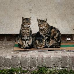 milano gatti castellosforzesco