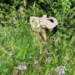 picsart elefant nature