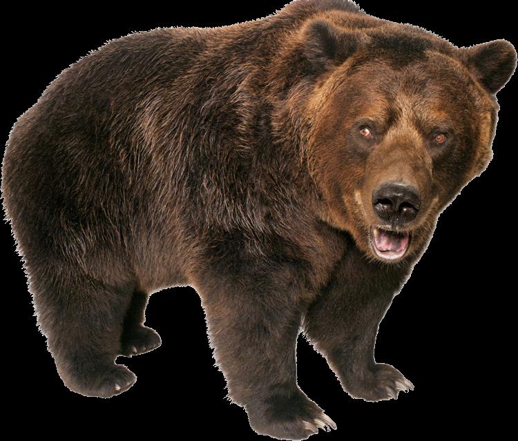 #bear #bears #animals #animal  #sticker #stickers #forst #ftestickers #nature #freetoedit